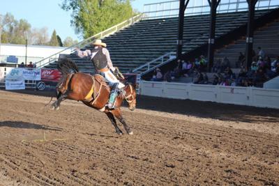 Jeffery Law, Saddle Bronc Rider