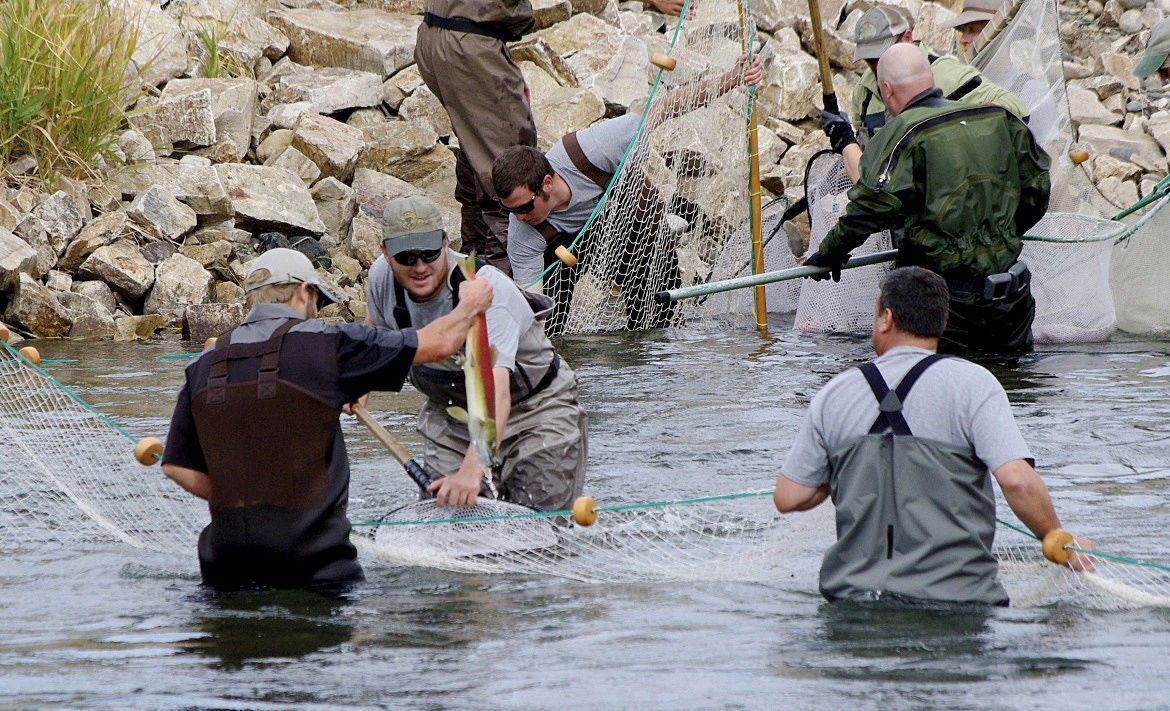 High heat prompts action by fish managers