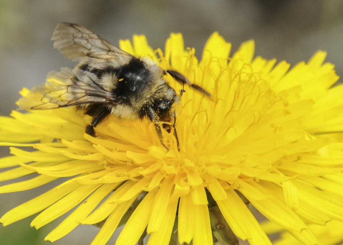 nativebee