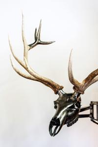 Challis welder-turned-artists melds metal, bone in works