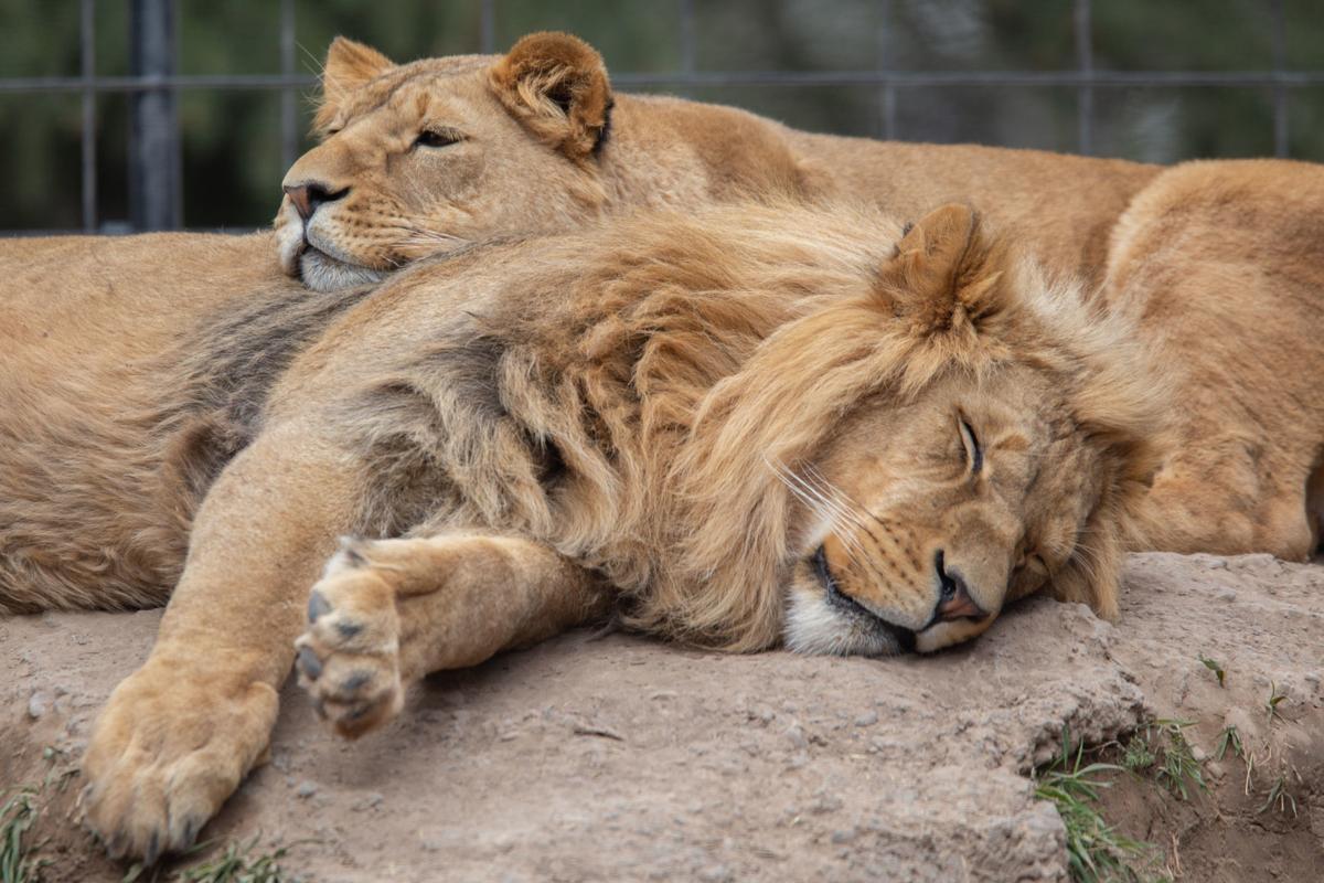 Idaho Falls Zoo