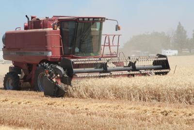 wheat record