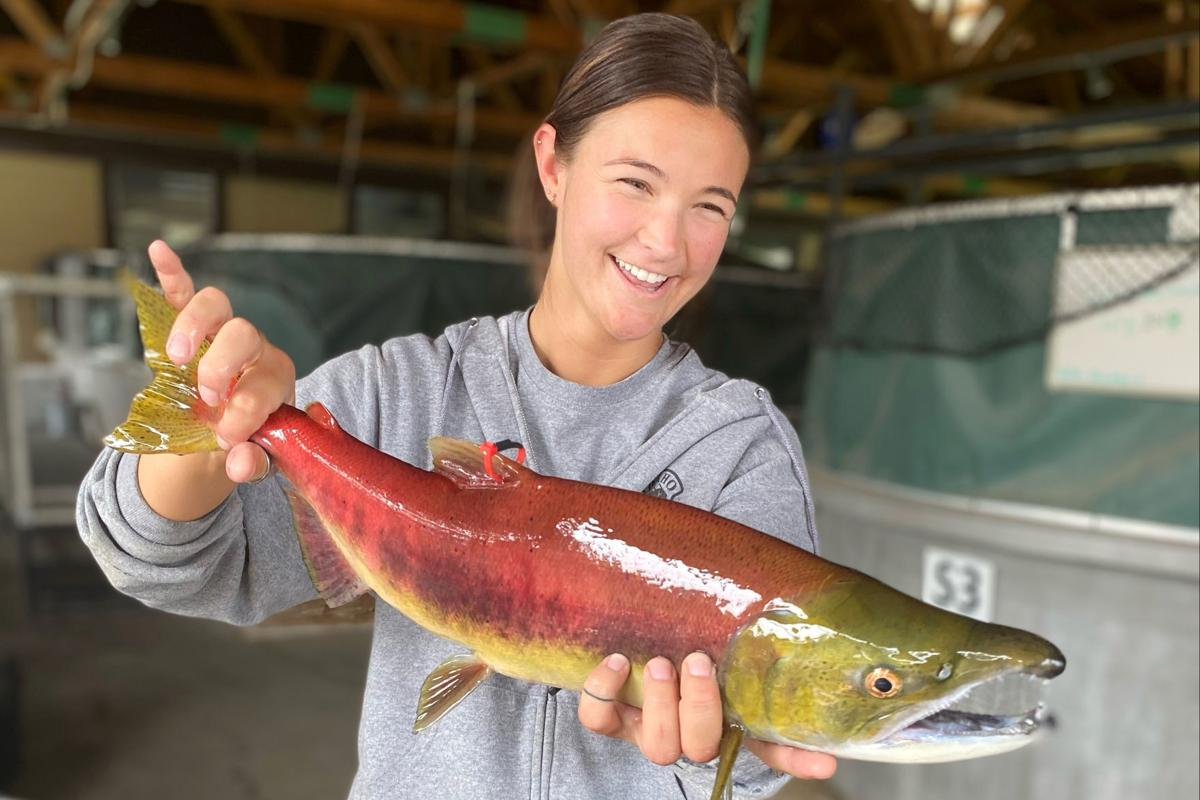 Trap-and-truck salmon effort deemed a success