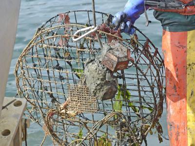 Derelict crab pots