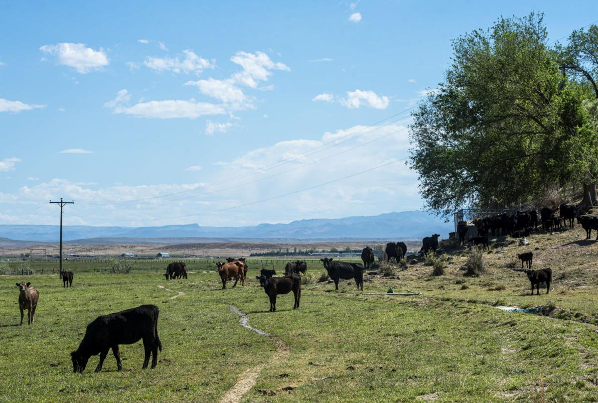 Small Ranches005.JPG