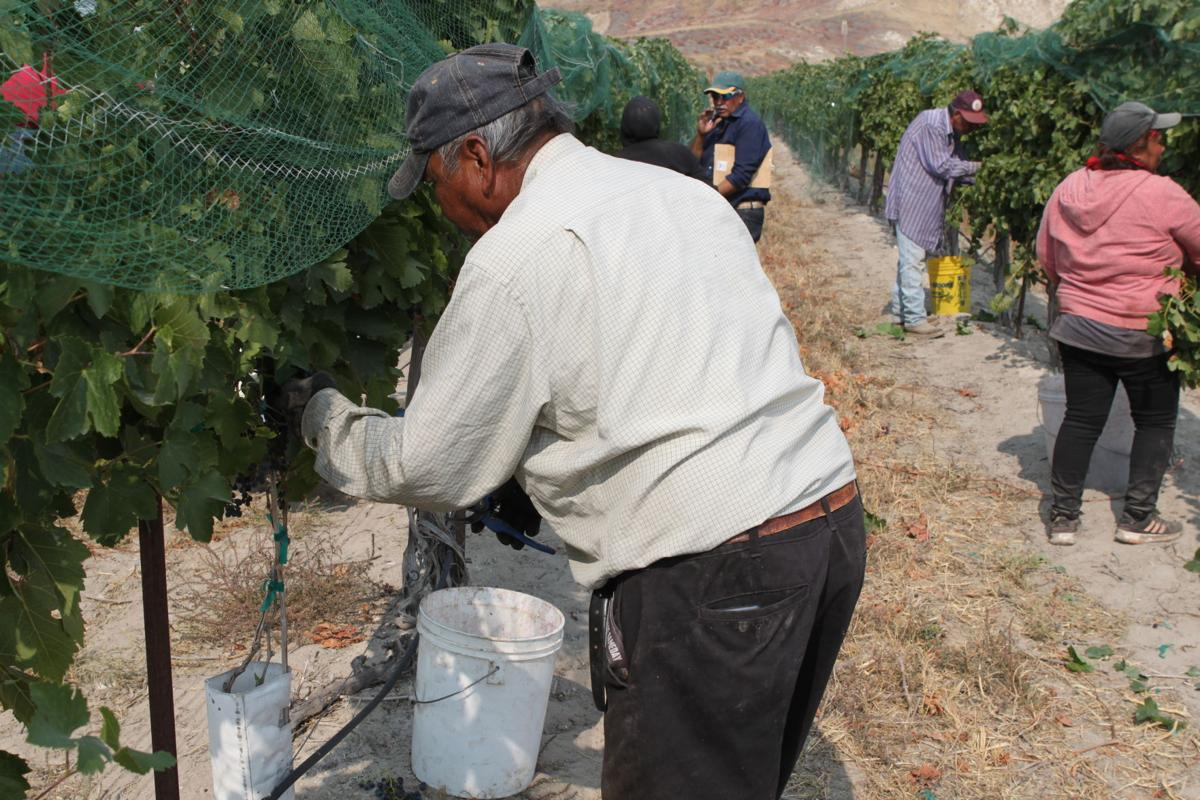 farm labor 1