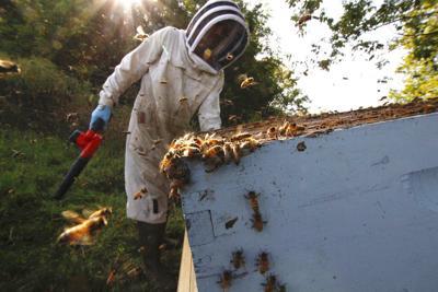 Virus Outbreak Beekeepers Challenge