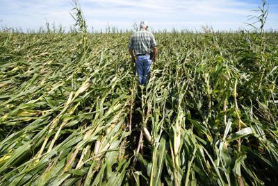 APTOPIX Severe Weather Midwest Corn