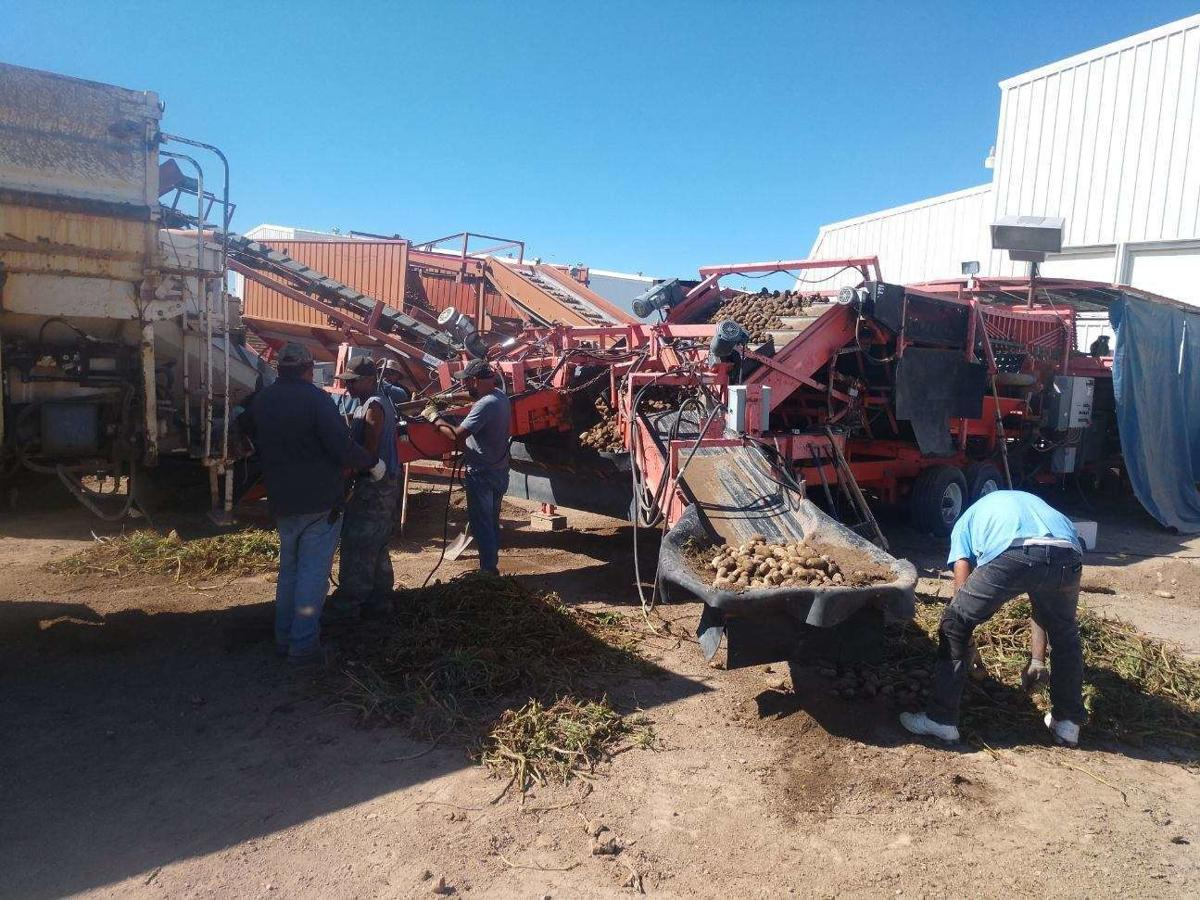 Revisions to farm relief program could help some potato growers