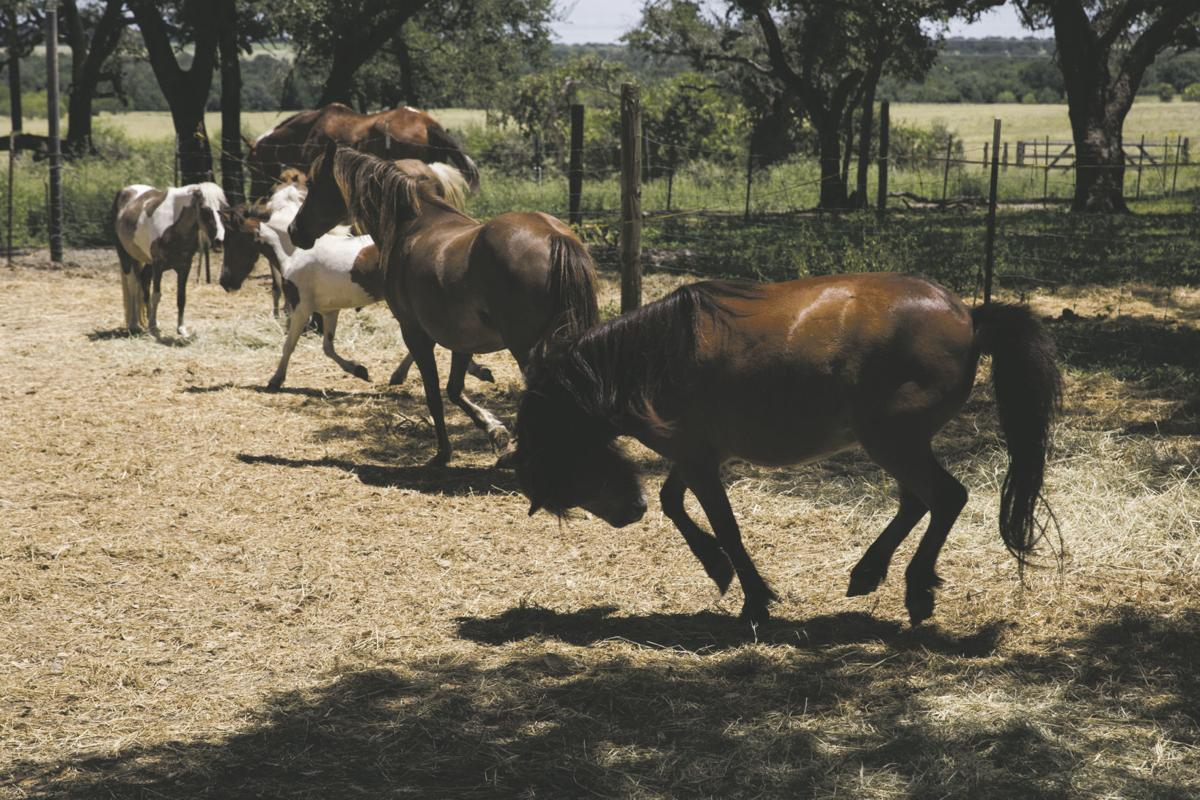 Texas horse sanctuary needs hay, other help | National