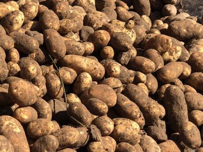 Mexico potatoes