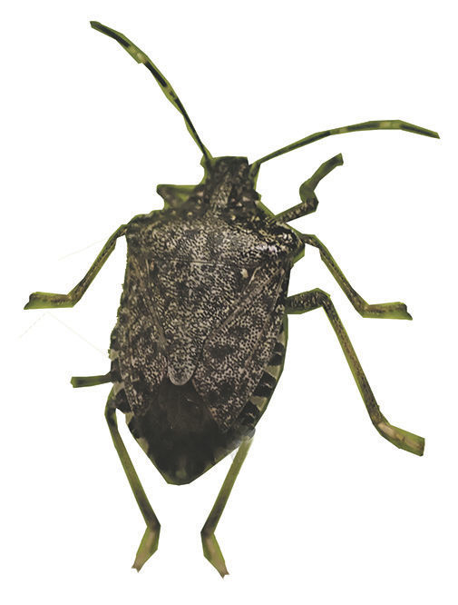 bug1123Cutout