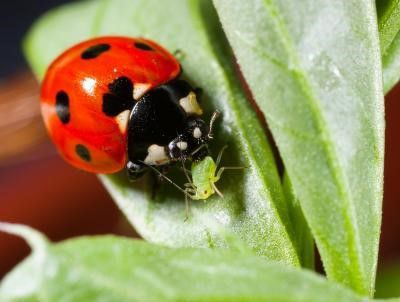 Tips For Preventive Pest Control Features Postregister Com