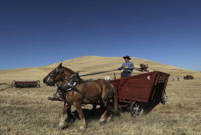 Horse Powered Harvest Photo Essay