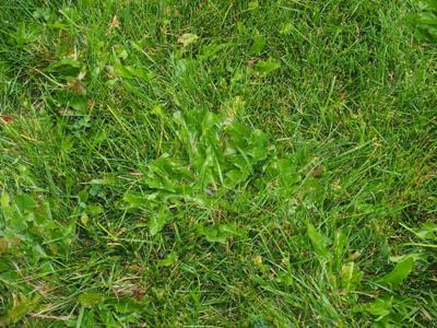 War on Weeds