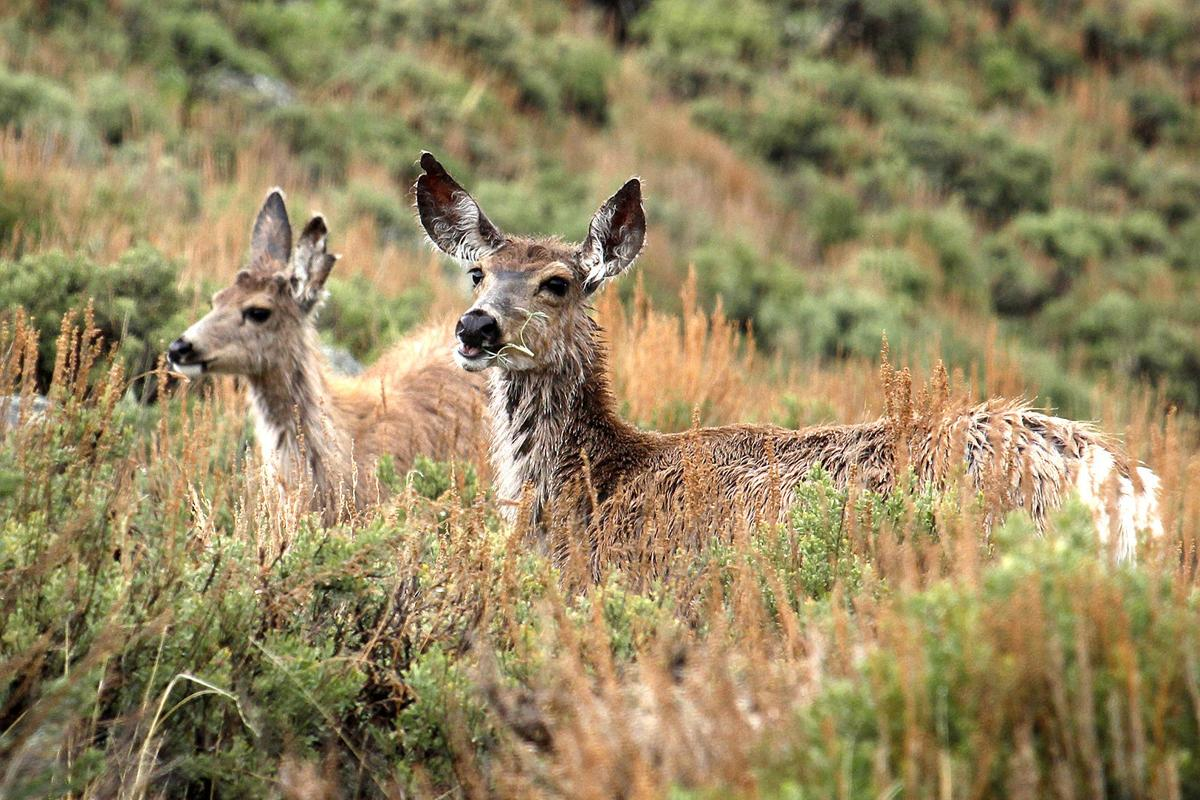 New migration maps serve as tools to help big game in West