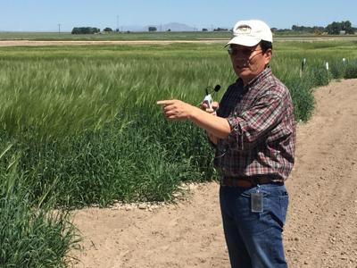 barley breeder