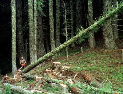 Environmentalists Loggers Agreement