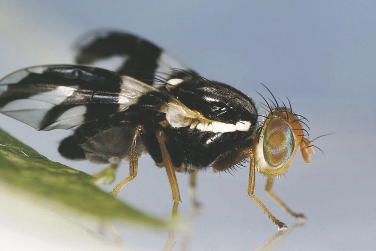 bug201