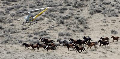 Wild Horses-Advisory Board