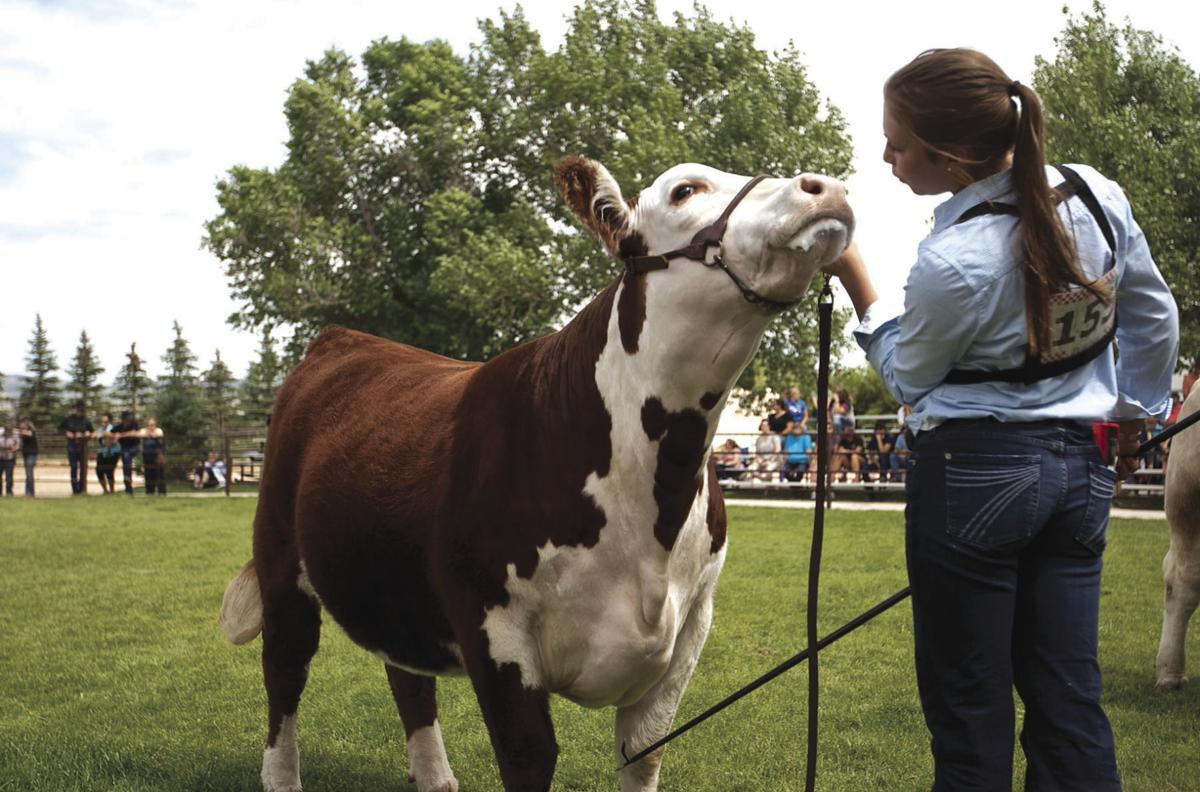 Beef Showmanship photo 1 (use for print)
