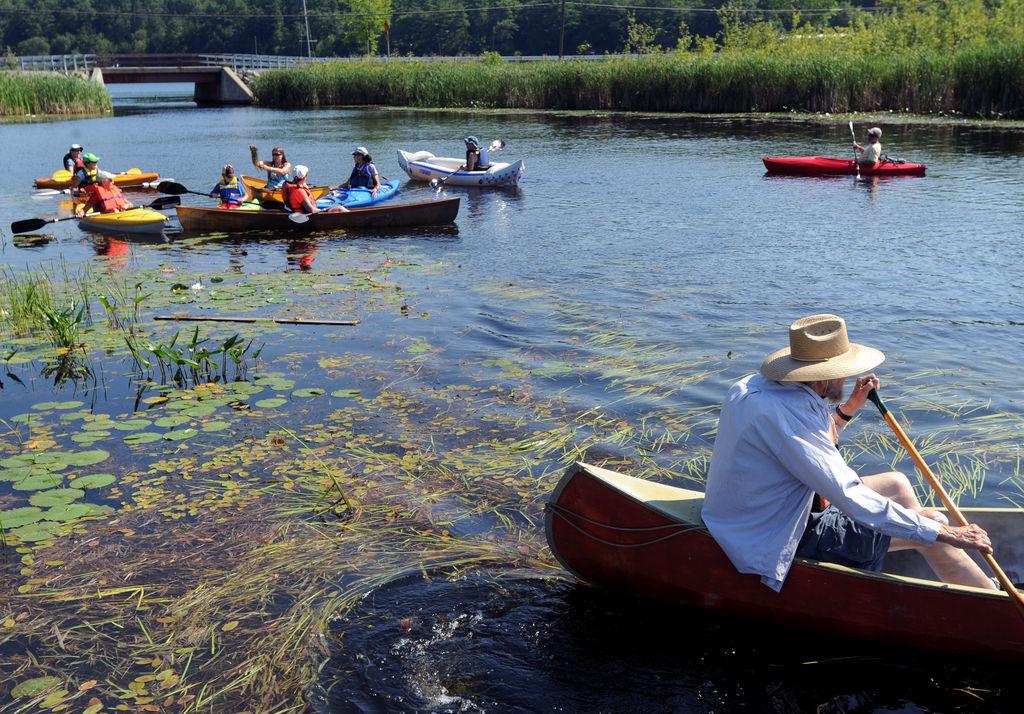 Adirondacks' invasive species