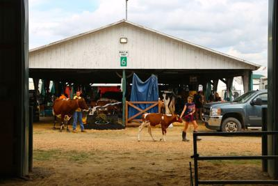 'A real treasure': Washington County Fair is a go