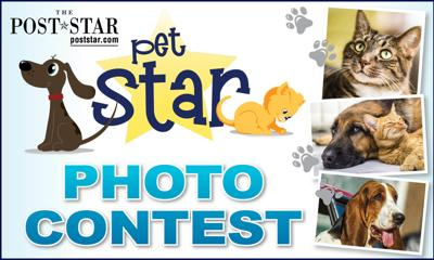 Pet Star photo contest logo