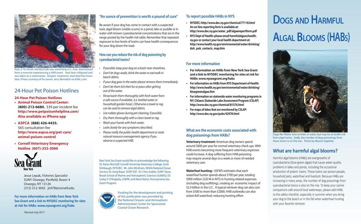 Dogs and Harmful Algal Blooms