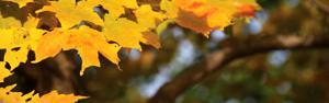 trees2_zpsde7763cf.jpg