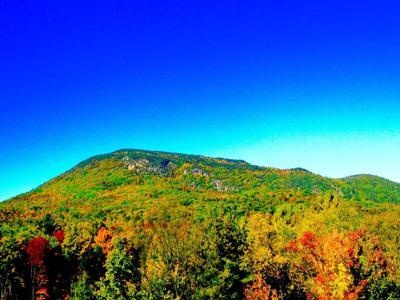 Adirondack trees