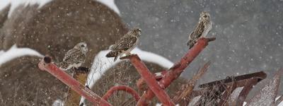 Owls in Washington County
