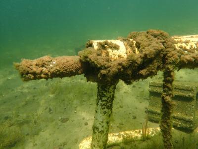 Algae on water intake pipe