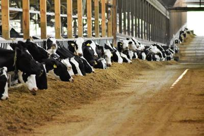 Farmers feel under siege, but keep milking