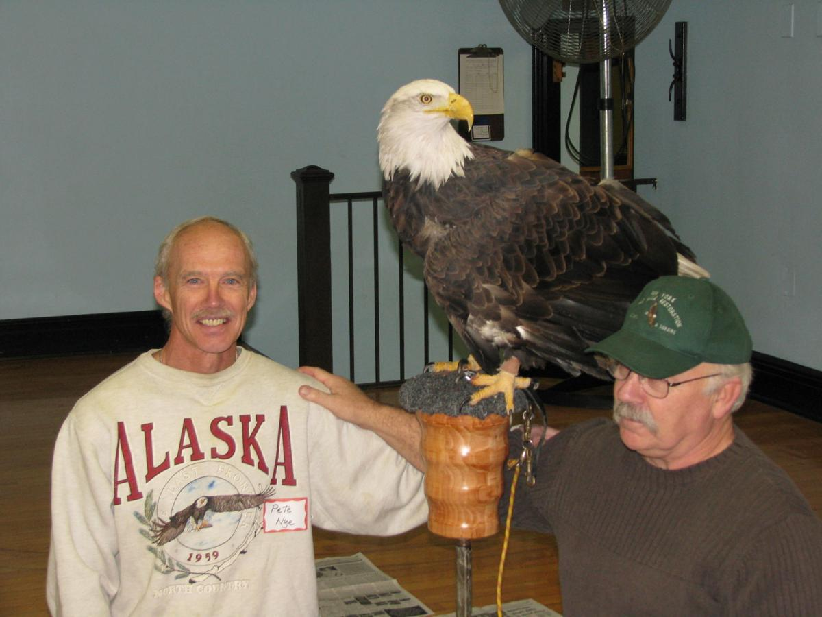 Bald eagles in New York