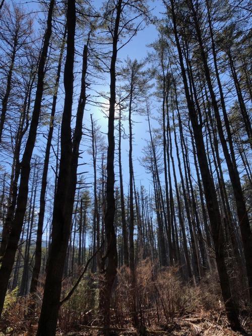 Hague woods
