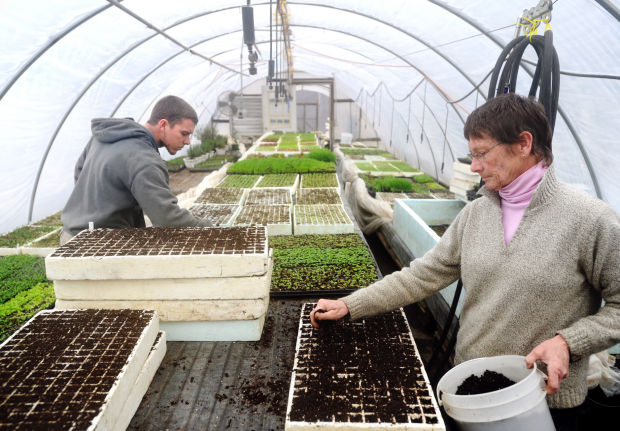 Growing Concerns Rise Of Modified Plants Raise Questions Local