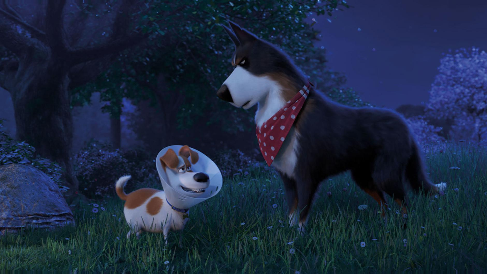 Secret Life Of Pets 2 Adds Babies And Toddlers To Lovable Animal Mix Entertainment Poststar Com