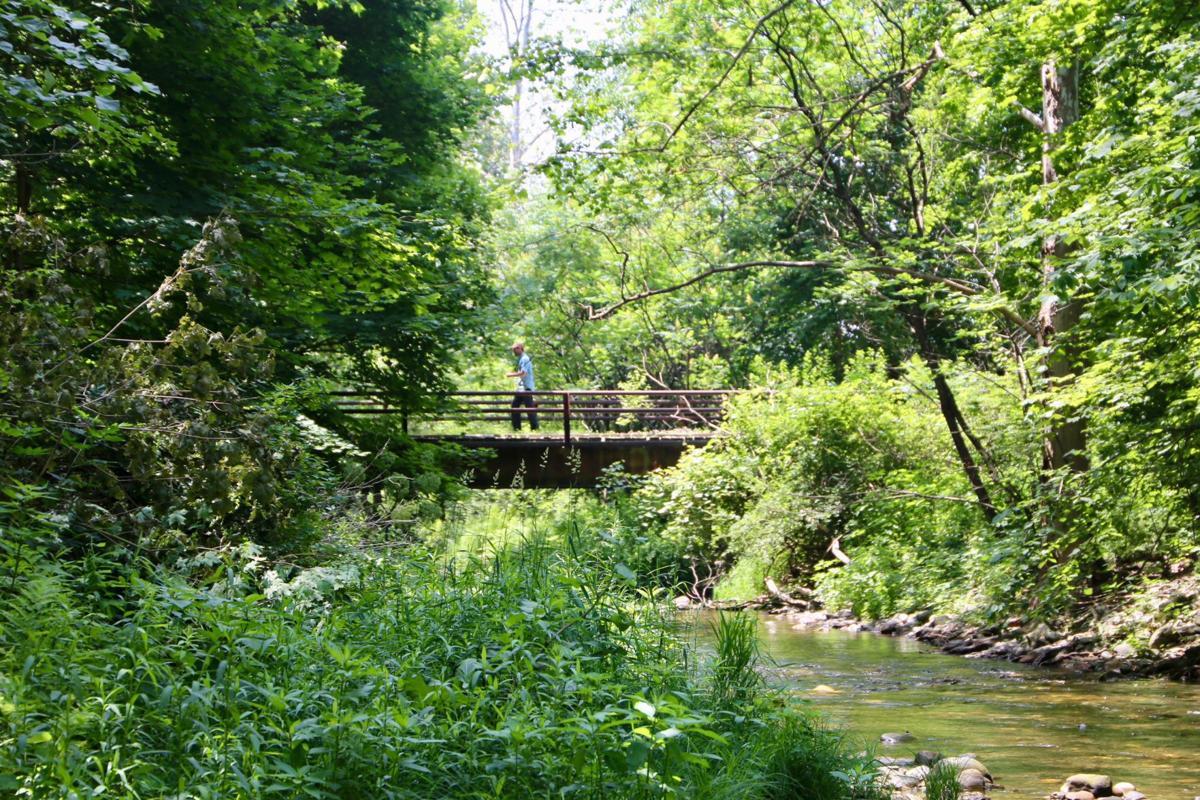 Cambridge Community Forest