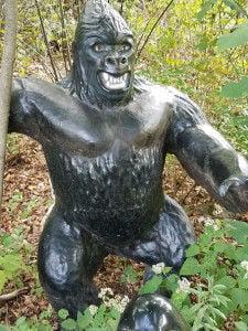Gorilla in the ferns