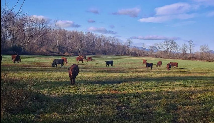 Kilcoyne Farm