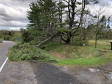Salem storm damage