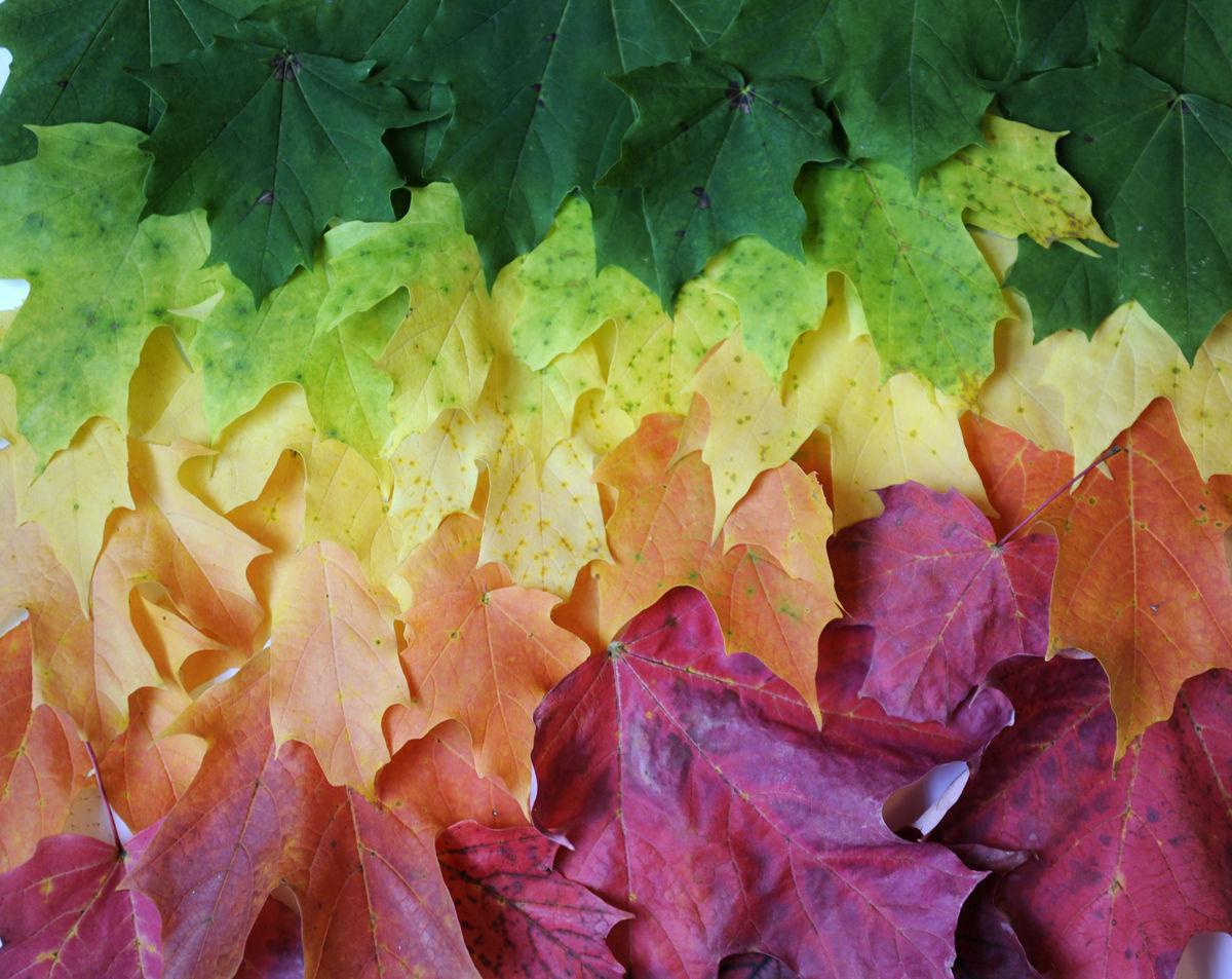 Fall Foliage | Blogs | poststar.com