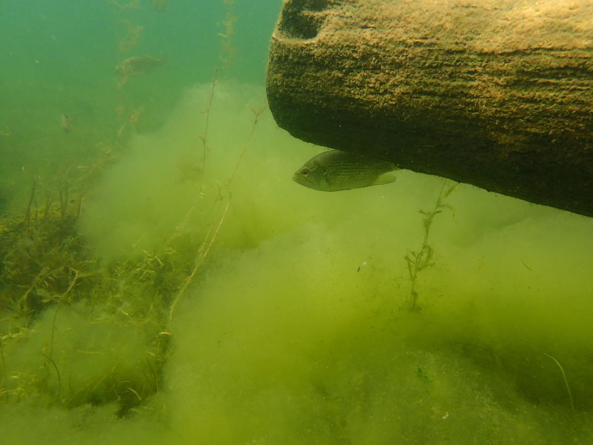 Lake George algae
