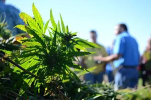 Hemp research measure watched by local ag advocates