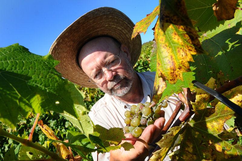 Grape Harvest SJ 04.JPG