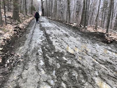 Merck Forest mud