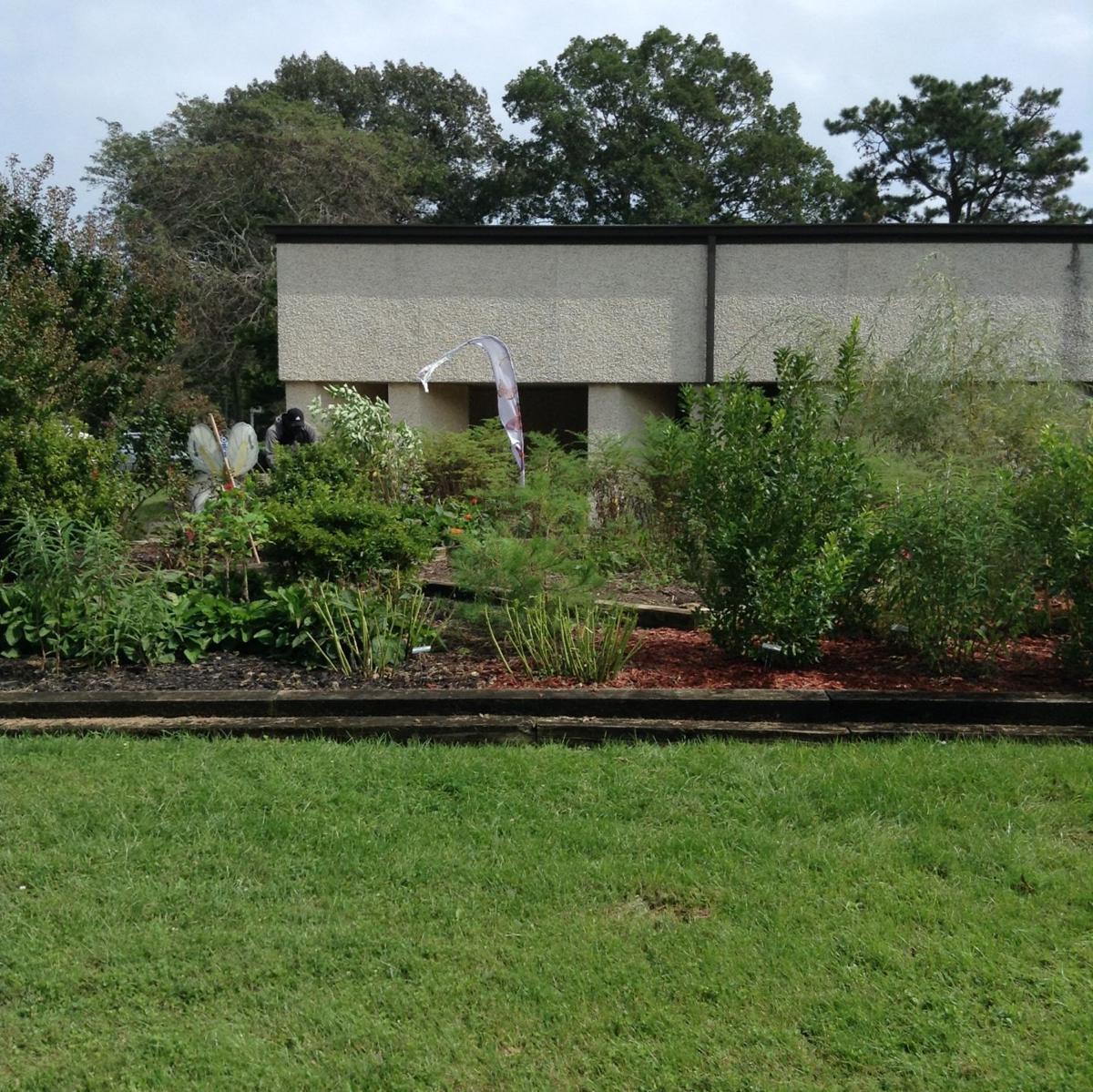 EHT garden 1.JPG
