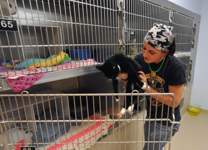 animal cruelty5075271.jpg