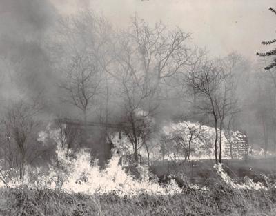 Wildfire 1963 (3)